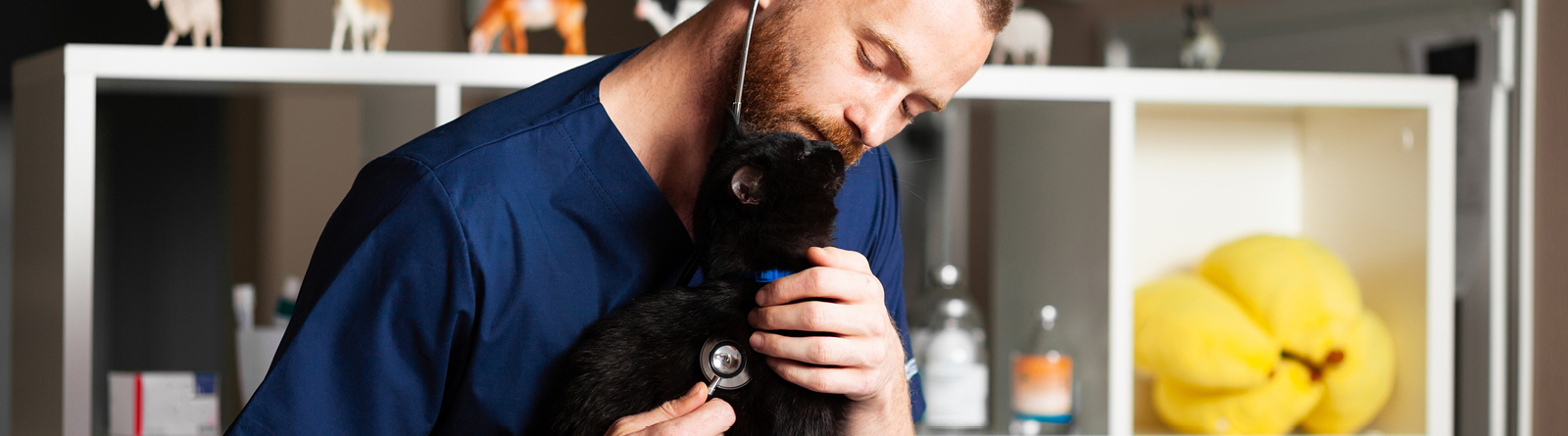 Veterinarian listening to a cat with a stethoscope